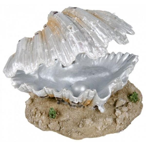 Znalezione obrazy dla zapytania muszle morskie i perły