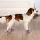 Trixie skarpetki antypoślizgowe dla psa - XXS-XS