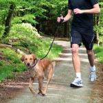 Trixie smycz do biegania z psem