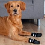 Trixie skarpetki antypoślizgowe dla psa - L-XL