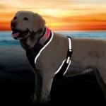 Trixie szelki świecące dla psa - L-XL