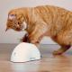 Trixie Hider zabawka interaktywna dla kota