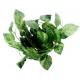 Sztuczne pnącze, roślinka do terrarium