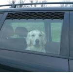 Kratka wentylacyjna do auta dla psa - 24-70cm