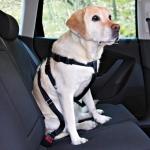 Trixie szelki samochodowe dla psa - L