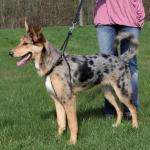Trixie Easy Walk szelki szkoleniowe dla psa - L