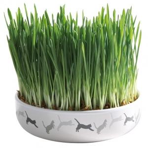 Trixie miska ceramiczna z trawą dla kota