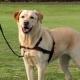 Trixie Lead'n'Walk Soft szelki treningowe - M-L