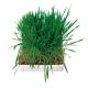 Trixie trawa, nasiona trawy dla kota - 100g